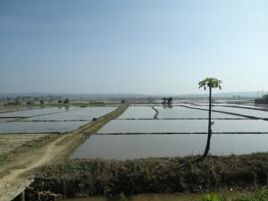 Northern Thai Rice Field