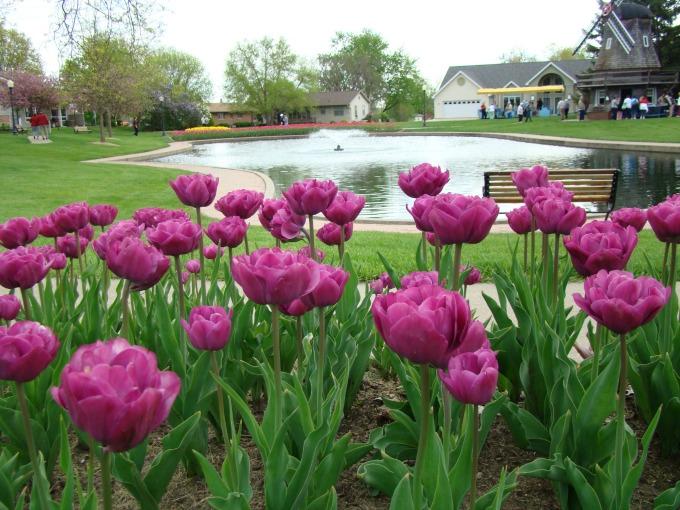 Pella Iowa tulips festival
